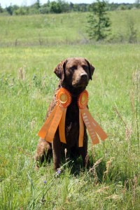 SHR CoolWater's Out On a Limb JH - Chesapeake Bay Retriever