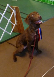 CoolWater Chesapeakes - Liam obtains his CGC