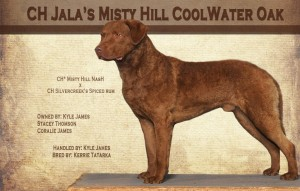 CH Jala's Misty Hill CoolWater Oak