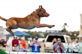 CoolWater's RipTide a Chesapeake Bay Retriever