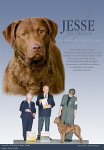 "GCH CoolWater's The Tide Is High - ""Jesse"""