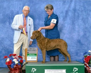 GCH CoolWater's The Tide Is High - Chesapeake Bay Retriever
