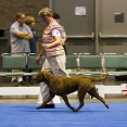 """Bronze GCh Ch CoolWater's The Tide Is High - """"Jesse"""""""